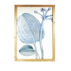 Cuadro lámina 52X72 Flor Azul marco marrón fondo blanco